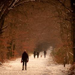 zon,beuk,sneeuw