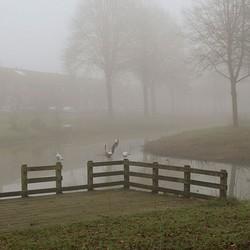 Meeuwen in de mist 2