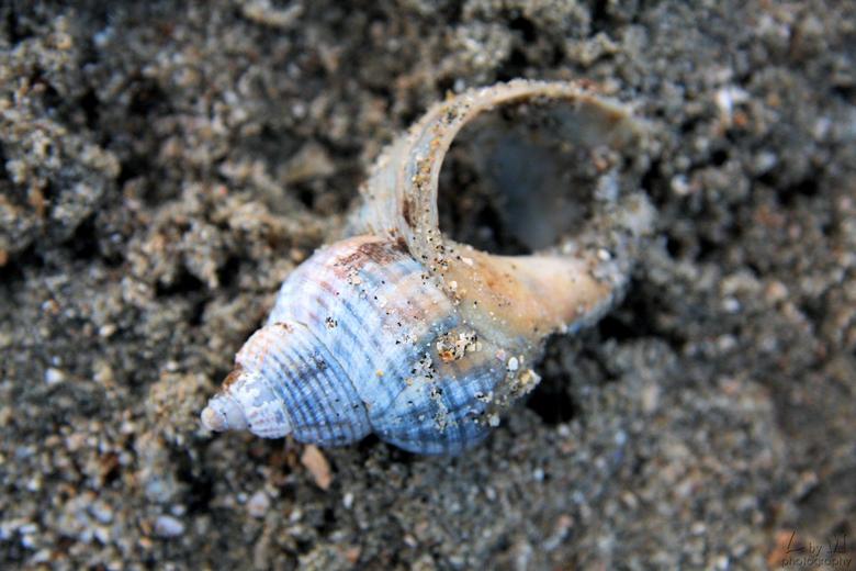 Mooie blauwe schelp