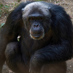 Omense zoo