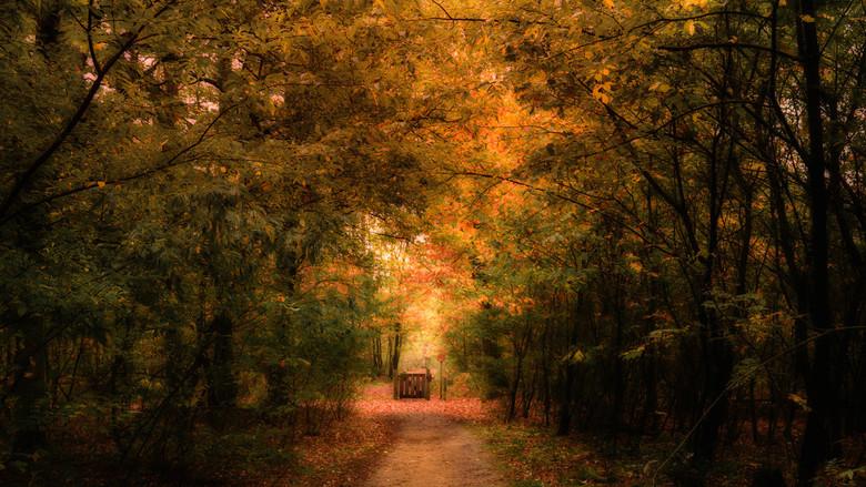 Het hekje - Wat een mysterieuze taferelen geven de bossen toch deze tijd van het jaar