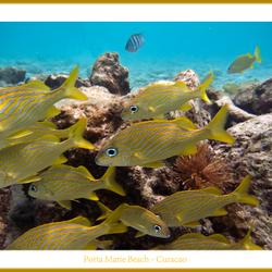 Porta Marie Beach Curacao