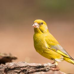 Ben ik geel of geel?