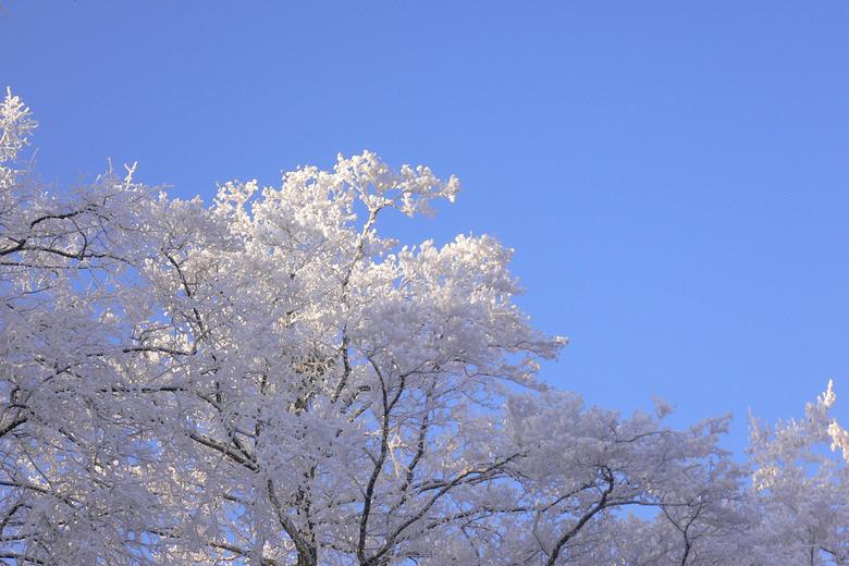"""Ijsbomen in de blauwe lucht - afgelopen zaterdag (22-12) zeer mooie natuur met geweldige """"ijsbomen"""" Vooral het vroege zonlicht erop was gewe"""