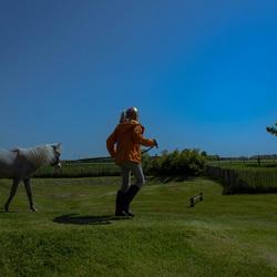 Het meisje en het mini-paardje