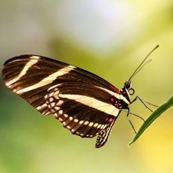 vlinder7 (800x533)