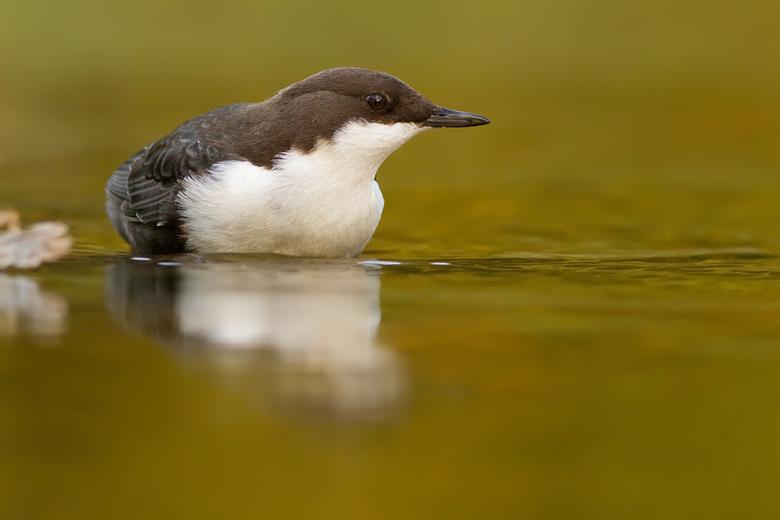 Eye Level - Het populairste vogeltje van Nederland.<br /> Meer op http://roeselien.wordpress.com/2010/12/21/40-dancing-dipping-column-deel-de-natuur/