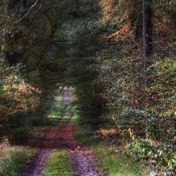 Kleur in het bos. Herfst.
