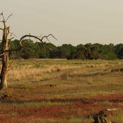Eenzame boom plateaux