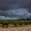 Rhone valley - Vineyard