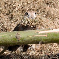 Zoek het marmotje