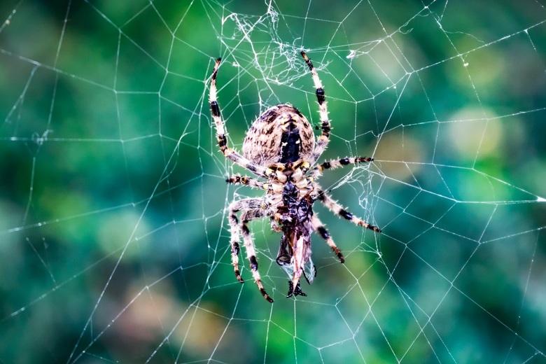 Your worst nightmare... - So creepy, so scary, so close...<br /> Deze spin kwam ik gisteren tegen in een bosje in de stad. Had toen helaas geen camer