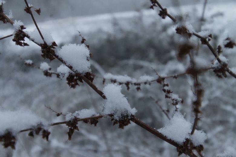 Ochtend sneeuw - Tijdens waarschijnlijk de enige witte winterdag van het jaar in Nederland, een prachtige ochtendwandeling gemaakt. De foto is gemaakt