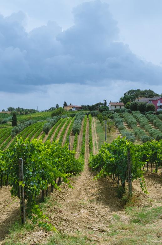 """Nog net voor de regen - Een paar minuten voor dat het ging regenen in Toscane. <br /> <br /> Bij interesse is er meer te zien op mijn <a href=""""https"""