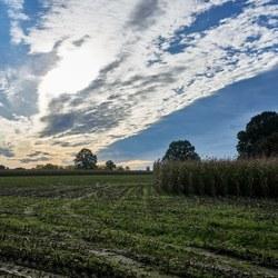 Wolken boven maisland