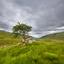alone in Scotland