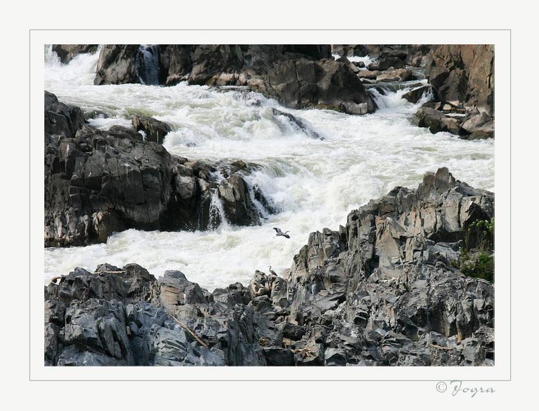 wild water -