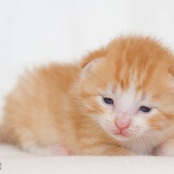 Milton '2 weken oud'