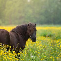 Paard in de bloemen