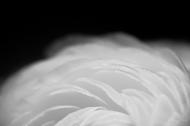 Petals essence - foto 2 - Petals essence. Foto 2 van een kleine serie. <br /> <br /> Korte toelichting (in Engels) op https://ello.co/baswind/post/5