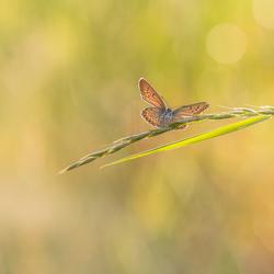Soon , I'll fly away......