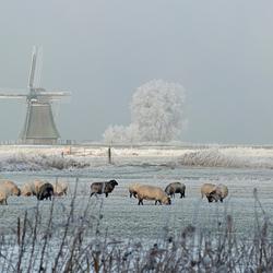 Winter in Friesland 2