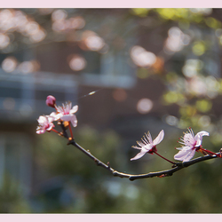 Lente 7