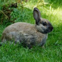 Broer konijn.