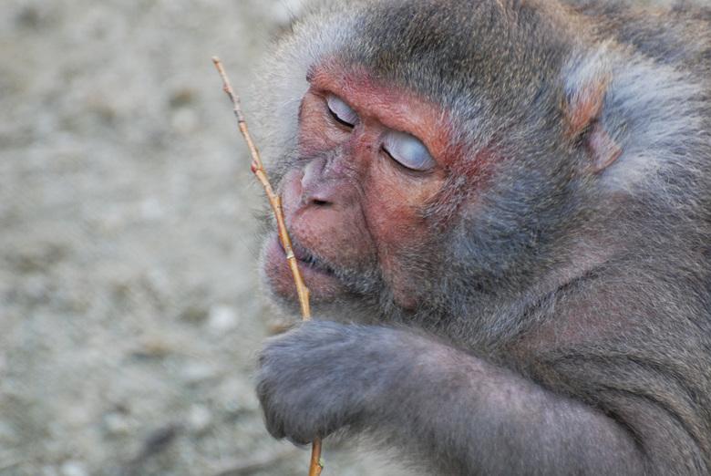 """Blijdorp - Dit aapje zit al zo lang in mijn map op een houtje te bijten dat hij er nu toch maar eens uit moet. <img  src=""""/images/smileys/rotfl.png""""/>"""