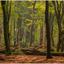 Dansende bomen in het bos