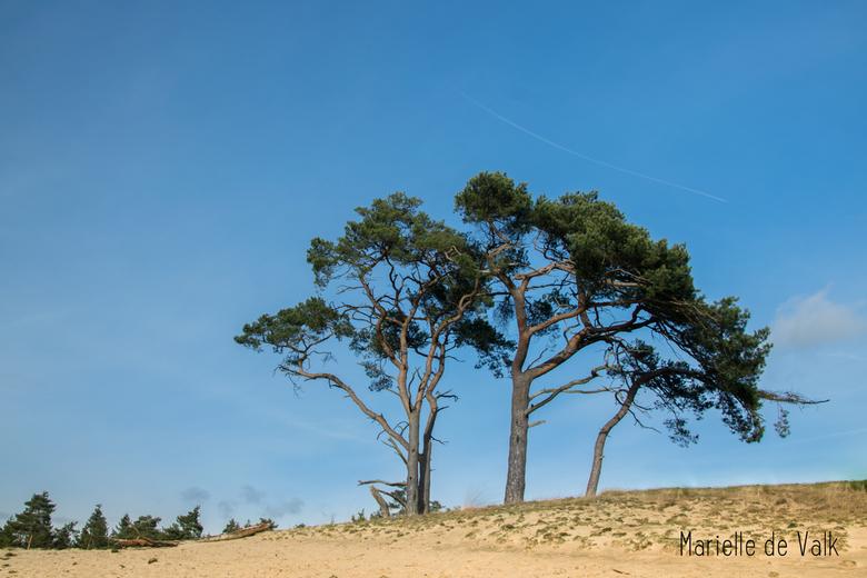 Zonnig landschap - En ineens was er dan een zonnige dag..... Afgelopen zondag konden we een groot deel van de dag genieten van de heerlijke zon met da