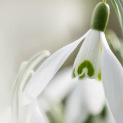 Witte lente