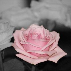 De Eenzame Kleurige