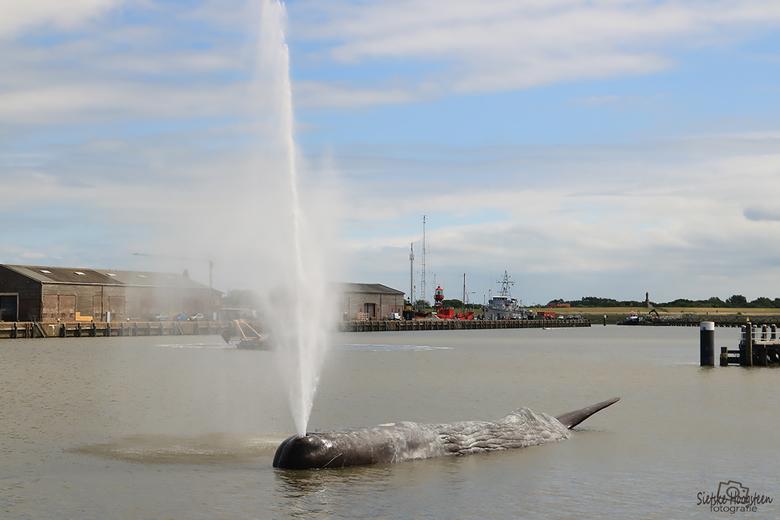 De Walvis Fontein  - De gestrande walvis, één van de fonteinen van het project 11 fountains in het kader van Leeuwarden-Fryslân Culturele Hoofdstad 20