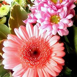 Mooi roze bloemen
