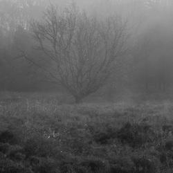 Boom in de mist