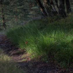 Loenermark -  Lichtval