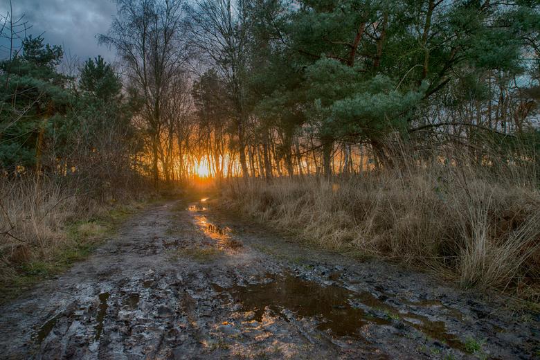 natte januari in het bos - laarzenpad Pannenhoef natuurgebied januari 2020