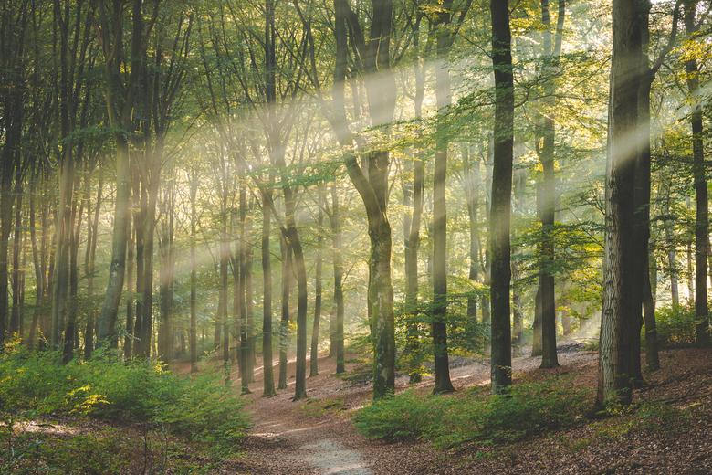 Zonsopkomst in het Amerongse Bos - Op een van de eerste echt koude ochtenden in september hing er een prachtige mist door het Amerongse Bos. Combineer