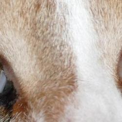 Je zou verdrinken in die mooie gele kijkers van Lulu! (Uitsnede vorige foto!)
