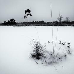 Sneeuw en ijs bij de Hatertse Vennen