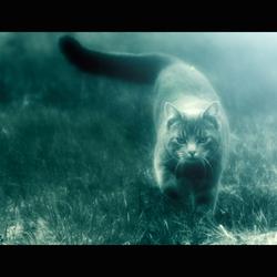 dream cat..