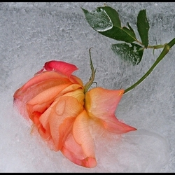 beauty in ice ! ..