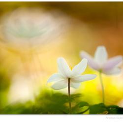 Spring Rhytmn