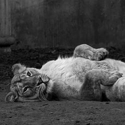 Lazy..