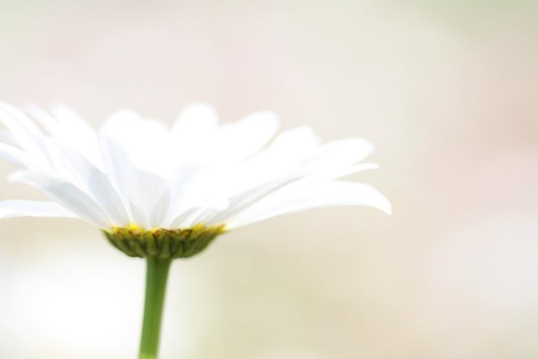 Overexposed flower