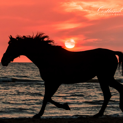 Paardsilhouet