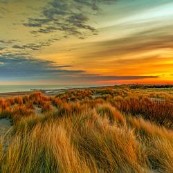 Duin in Zeeland (1 van 1)-2