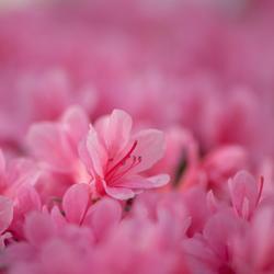 Roze wereld