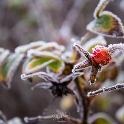 Herfst ontmoet Winter